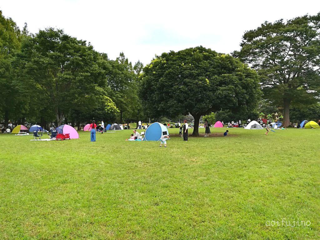 大崎公園 芝生